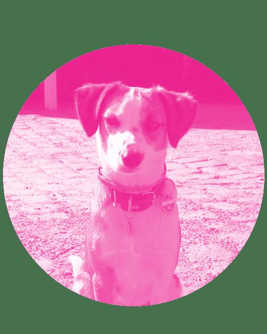 Milu der Hund